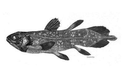 Ilustração Científica // Workshop de Pedro Salgado