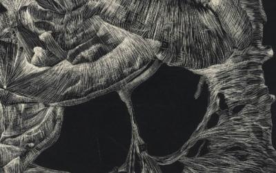 O Corpo Transparente —O Desenho no Museu Anatómico